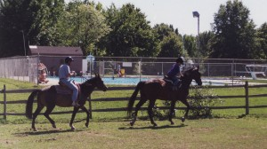 1990s-horses-and-old-pool